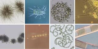 microscopy2