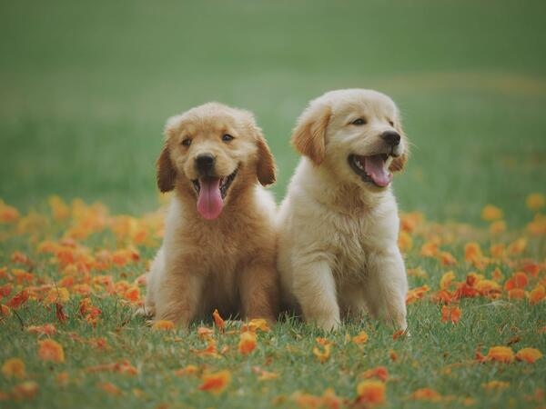 adorable-animal-breed-1108099