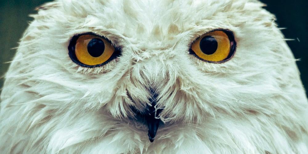 cv-owl