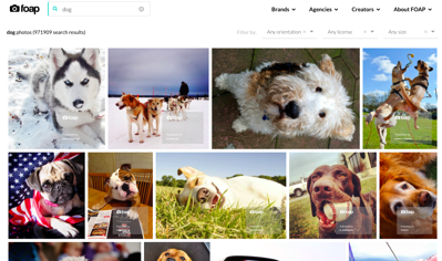foap-dog-images-computer-screen